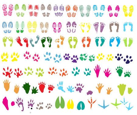 shoeprint: Collection of shoeprint, footprint, animal and bird trails