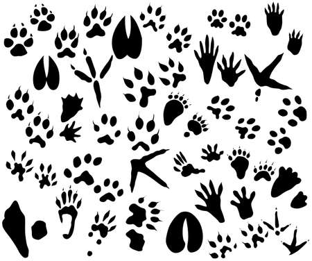 Collection of animal and bird trails  Vector