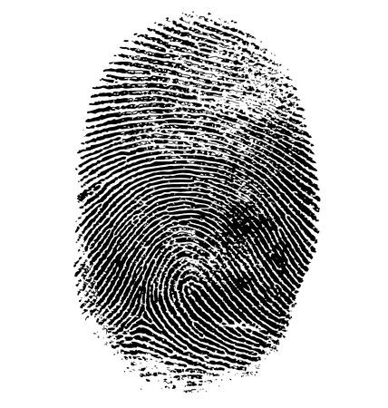 指紋は、白で隔離のベクトル イラスト  イラスト・ベクター素材