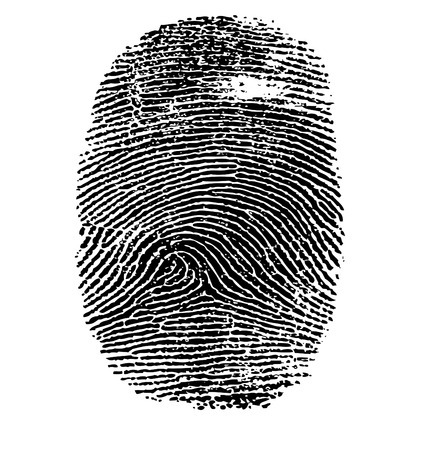 Vector illustration of fingerprint isolated on white