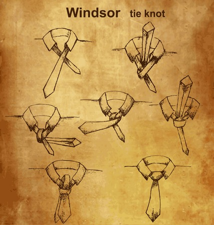 windsor: Vector tie and knot vintage instruction Windsor tie knot