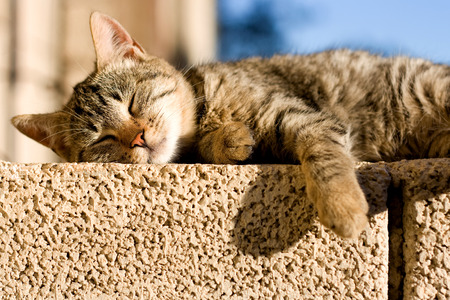 Brown tabby cat sleeping on the wall. Archivio Fotografico