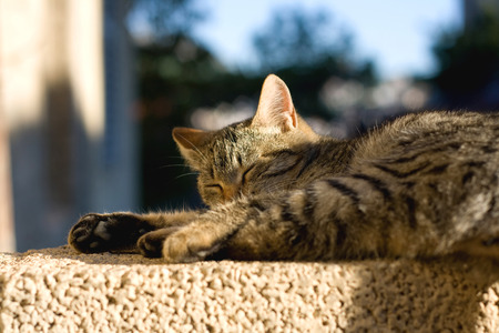 shallow dof: Cat sleeping on the wall and sunbathing, selective focus.
