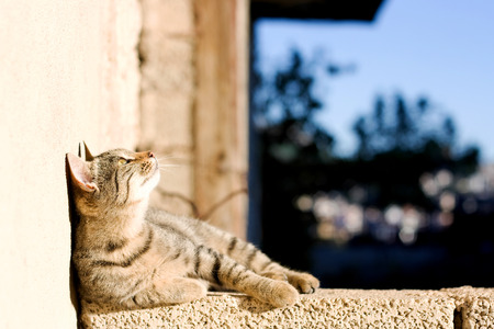 Young tabby cat lying on the wall and looking up, sunbathing. Selective focus.