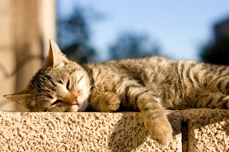 Young brown tabby cat lying on the wall, sunbathing and trying to sleep. Selective focus.