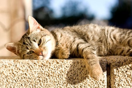 Brown tabby cat trying to sleep on the wall, sunbathing. Selective focus.