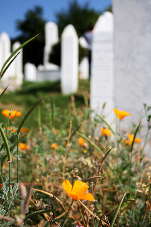vertical format: Orange flower growing on the islamic cemetery, in Sarajevo, Bosnia and Herzegovina. Vertical format, selective focus. Stock Photo