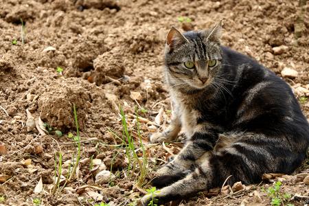 eyes green: Gato marr�n rechoncho con grandes ojos verdes que mienten en el jard�n. La luz natural, foco selectivo.