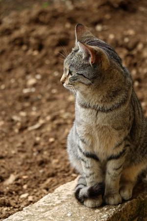 vertical format: Brown tabby kitten sitting in the garden. Natural light, vertical format, selective focus.