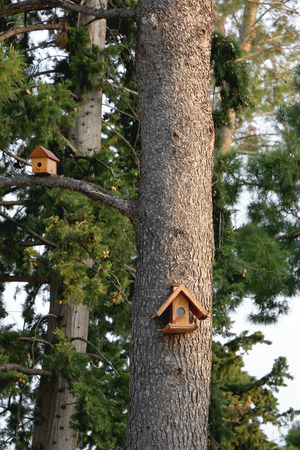 tree vertical: Little birdhouses on the pine tree. Vertical format, selective focus.