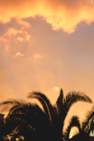 vertical format: Palm tree and clouds during sunset. Abstract defocused background. Vertical format. Stock Photo
