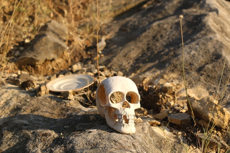 cannibal: Artificial skull and plate thrown on the rock, among dry grass. Selective focus.