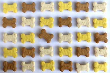 treat like a dog: Dog treats shaped like little bones, organized. One treat breaks the pattern. Stock Photo
