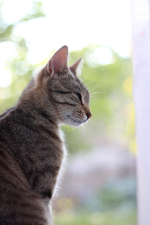 profile view: Beautiful brown tabby cat, profile view. Selective focus. Stock Photo