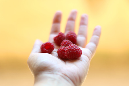 Hand holding raspberries. Bright yellow background, selective focus.