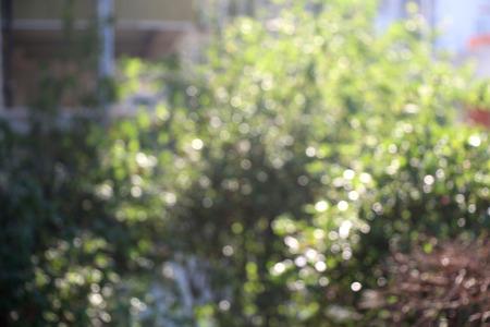 illuminated: Garden illuminated by sunlight, defocused.