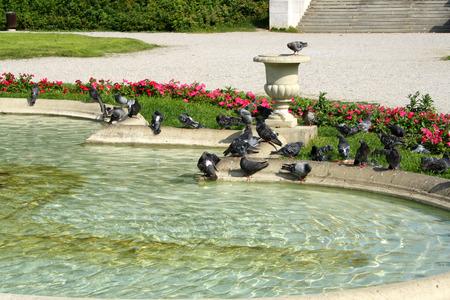 Pigeons on a fountain in Zrinjevac Park, Zagreb, Croatia.
