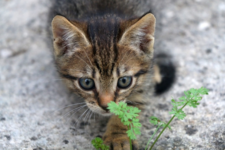 Cute tabby kitten exploring the garden. Selective focus. Cute tabby kitten exploring the garden. Selective focus. Stock Photo