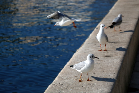 field depth: Seagulls on the waterfront. Selective focus. Stock Photo