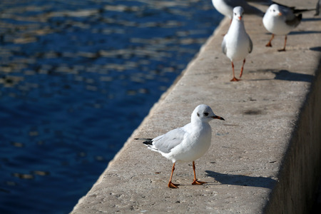 Seagulls on the waterfront. Selective focus. Stock Photo