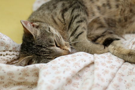 shallow dof: Cute tabby cat sleeping on floral sheets. Selective focus.