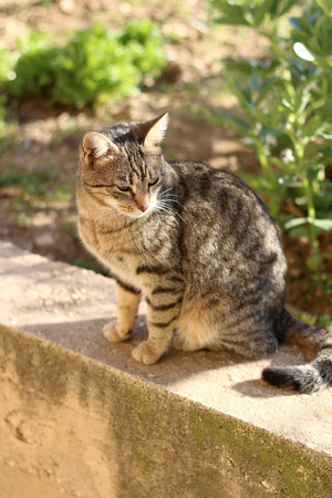 Small brown tabby cat sitting in the garden, sunbathing. Selective focus. Stock Photo