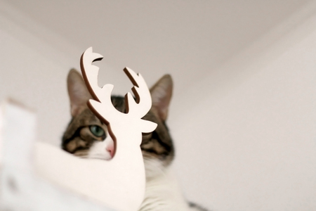 White and brown tabby cat hiding behind Christmas decoration and making funy faces. Selective focus, head close-up. 스톡 콘텐츠