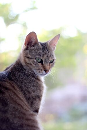 Portrait of a brown tabby cat with curious look. Selective focus. 免版税图像