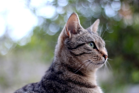 Portrait of brown tabby cat sitting in the garden. Selective focus.
