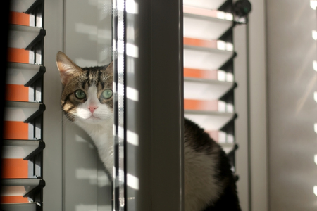 Cute cat hiding behind the window. Selective focus.
