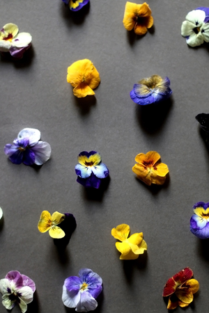 Arrangement of edible flowers on grey background. Top view, selective focus. 免版税图像