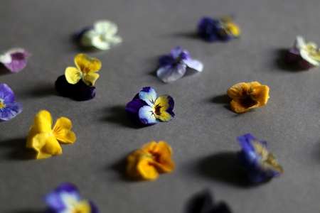 Arrangement of edible flowers on grey background. Top view, selective focus.