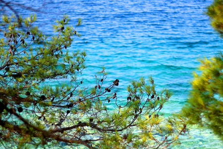 Pine tree growing in front of the sea. Selective focus, vibrant colors.
