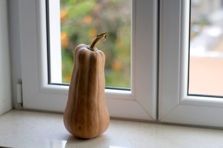 Homegrown squash on a window sill. Selective focus.