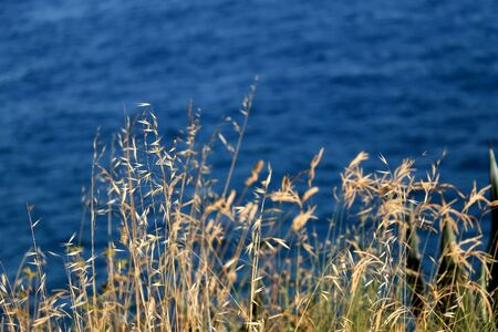 Uncultivated plants growing by the sea. Selective focus.