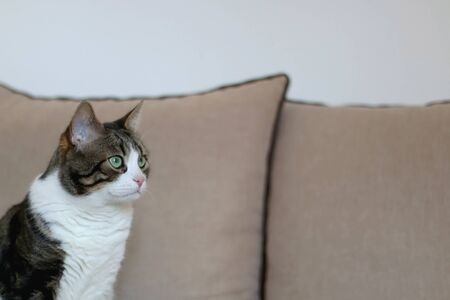 Domestic tabby cat sitting on a couch. Selective focus. Zdjęcie Seryjne - 143133502