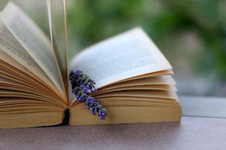 Open book and lavender flower. Reading in the garden. Selective focus. 写真素材