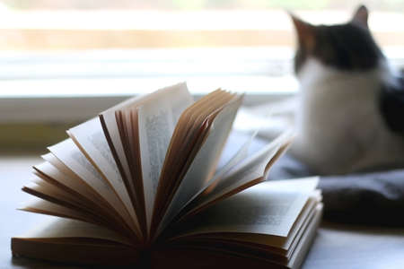 Open book on a table and tabby cat looking through the window. Selective focus.