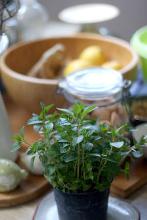 Pot of mint in a kitchen. Selective focus.