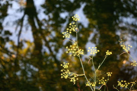 Yellow wild flowers growing by a river. Selective focus.