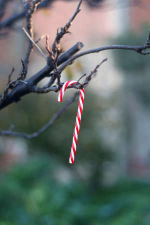 Candy cane decoration hanging on a bare tree in the garden. Selective focus.