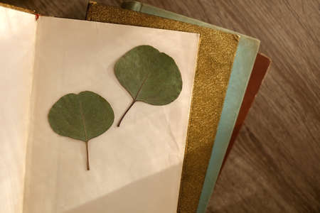 Stack of vintage hardcover books and pressed eucalyptus leaves. Top view. 版權商用圖片