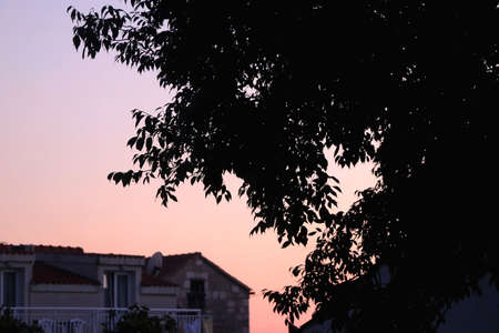 Silhouette of a tree branches in a garden and beautiful sunset sky. Selective focus.