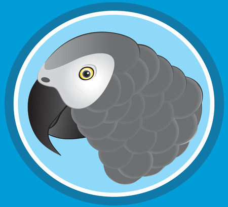 african grey: African Grey Parrot
