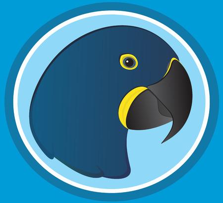 macaw: Blue Macaw Illustration