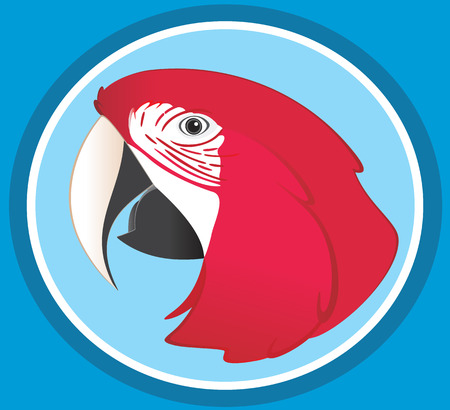 macaw: Red Macaw Illustration