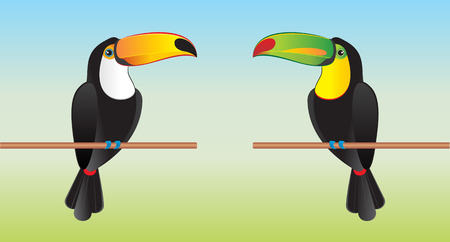 keel: Toucans with different beaks