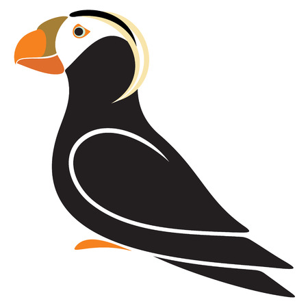 seabird: Tufted Puffin