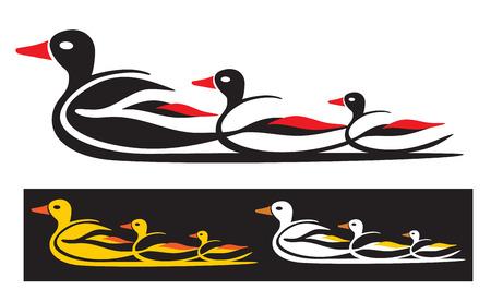 water bird: Ducks