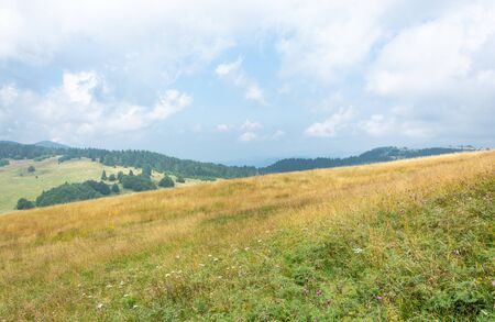 Yellow grassy hill slope covered with white and pink flowers and pine forest against cloudy blue sky Stock Photo